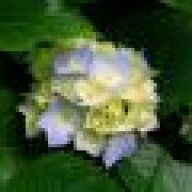 florencias