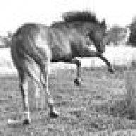 horsewishr