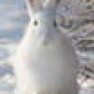 Lepus timidus