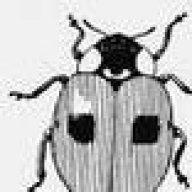 l'entomologiste amateur