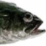 estemero